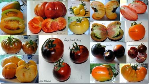Chili, tomat 4 sept -13