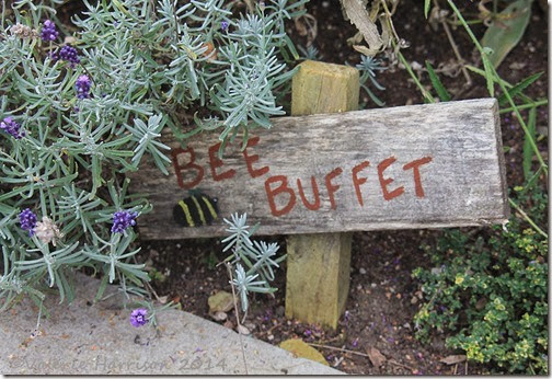 61-bee-buffet