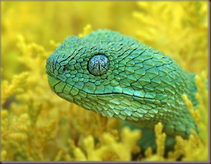 Amazing Animals Pictures The Bush Viper (8)