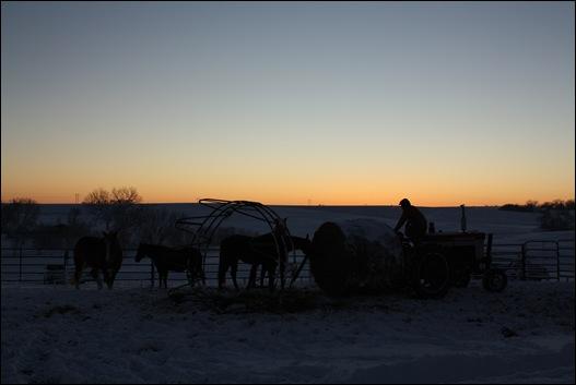 snow horses 135