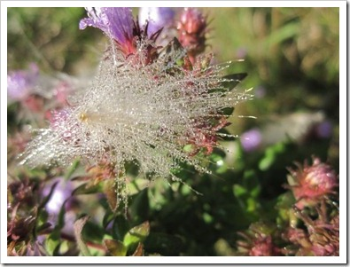 20120928_flowers_005