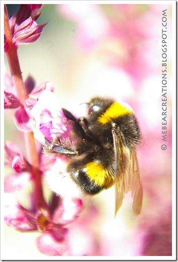Bee_08