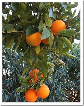 120103_orange_03