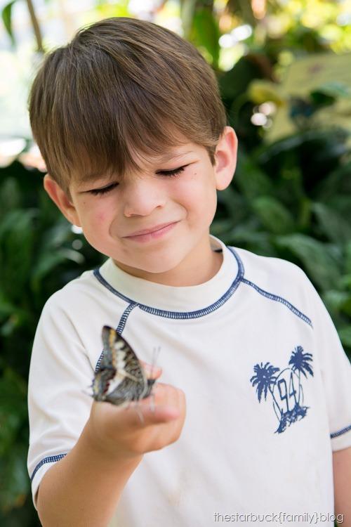 Callaway Gardens butterfly garden blog-19