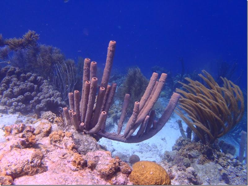 023a korallen