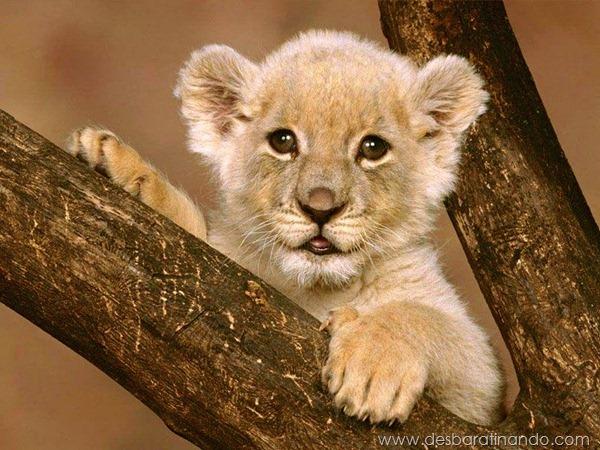 filhotes-de-animais-fotos-cute-cuti-desbaratinando (1)