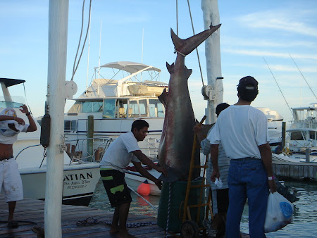 A shark fished in Mexico