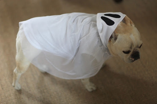 Sharkey checks out the ghost costume. 