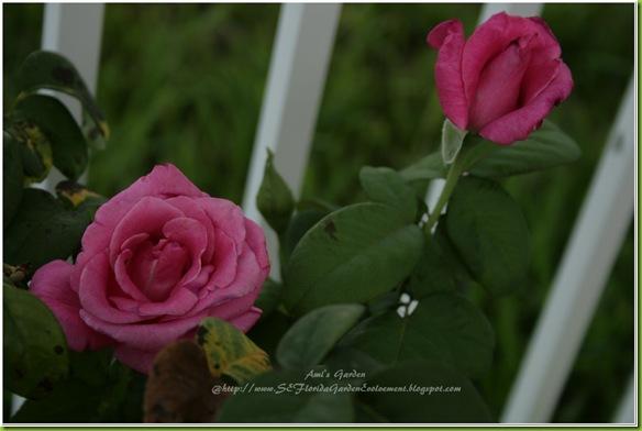 2011-07-16_00002