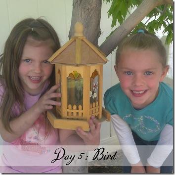 Day 5 bird
