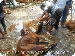 Suasana Pemotongan Hewan Kurban di Masjid Raya Kota Teluk Kuantan (6)