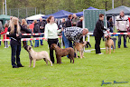 20100513-Bullmastiff-Clubmatch_30887.jpg