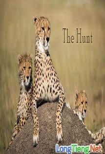 Bbc Thú Săn Mồi - The Hunt