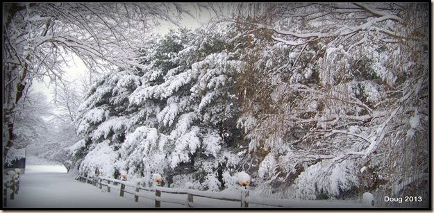 1-snow2013 008