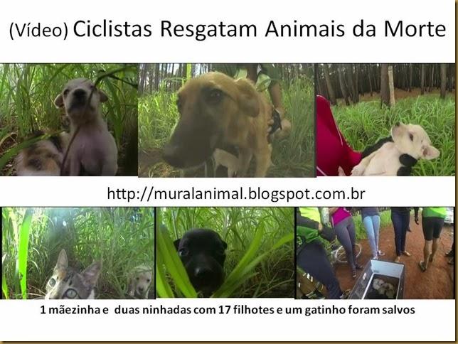 Vídeo) Ciclistas Resgatam Animais da Morte
