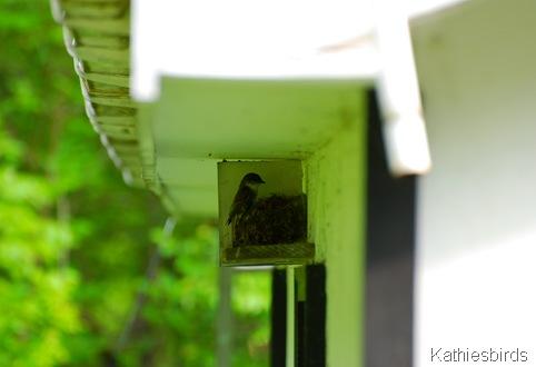 2. EAPH nest-kab
