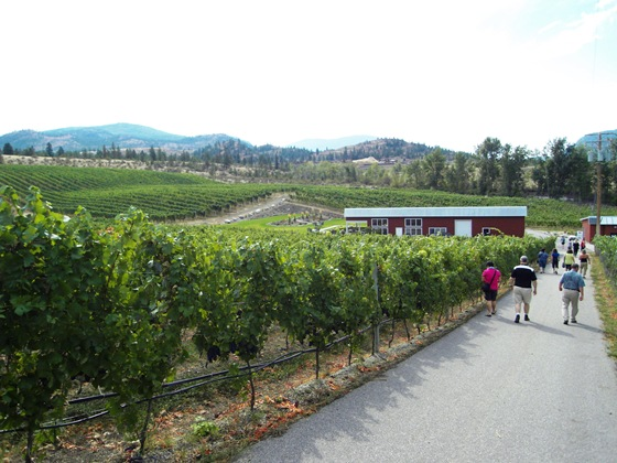 Meyer Vineyards