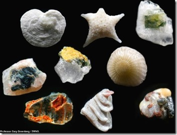 sand grains magnified