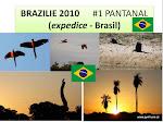 BRASIL 2010_Pantanal_1