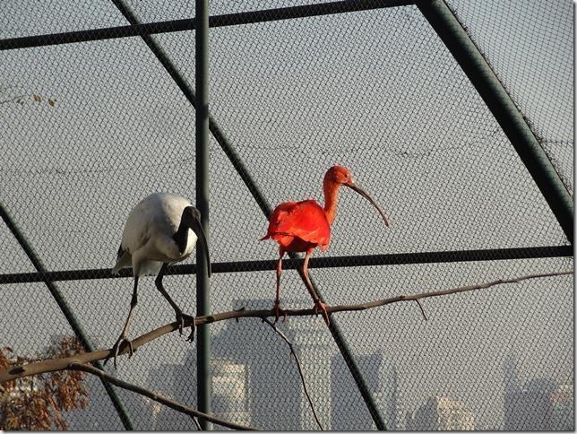 Santiago_Zoo_DSC03753