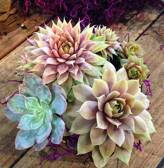 succulents seed floral 10401504_885351161490798_5468035085410309989_n