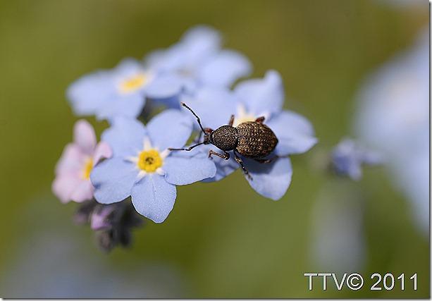 ötököitä kukkia 064