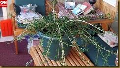 t1larg.911.plant.donovan.irpt