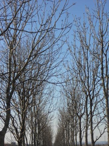 2011.12.21-1 散歩道