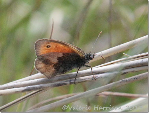 49-small-heath