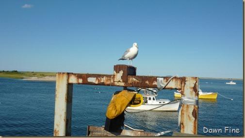 Cape Cod_010