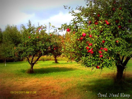 our beautiful orchard