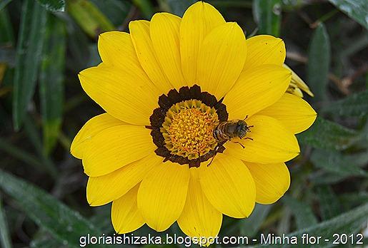 Glória Ishizaka - minhas flores - 2012 - 16