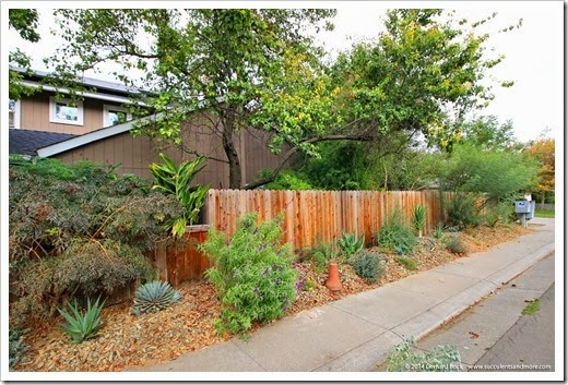 Front yard desert bed—September 2014 update