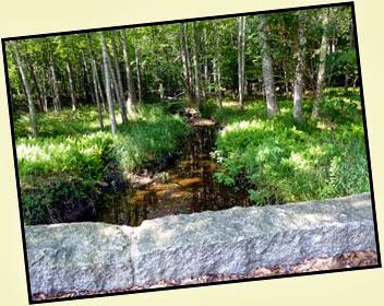 01d - Jesup Path - Bridge and Ferns