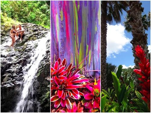 Hawai i 1