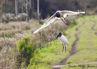 Amazing Pictures of Animals, Photo, Nature, Incredibel, Funny, Zoo, Jabiru mycteria, Bird, Aves, Alex (2)