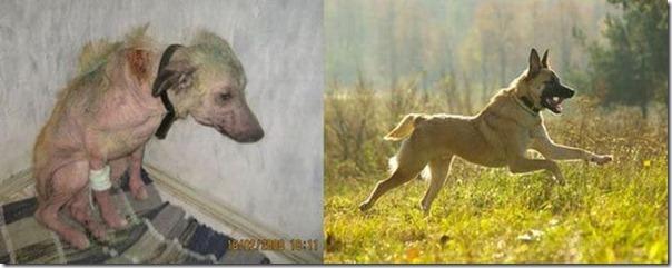 Animais Antes e Depois do Resgate (15)