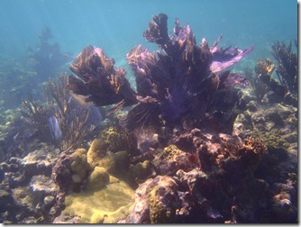 coral gardens, South Long Ccoa Cay