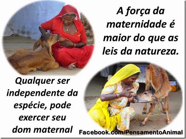 dom-maternal