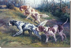 on point english setters and pointer