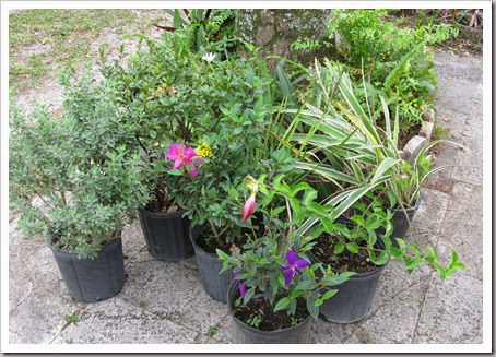 12-29-christmas-plants