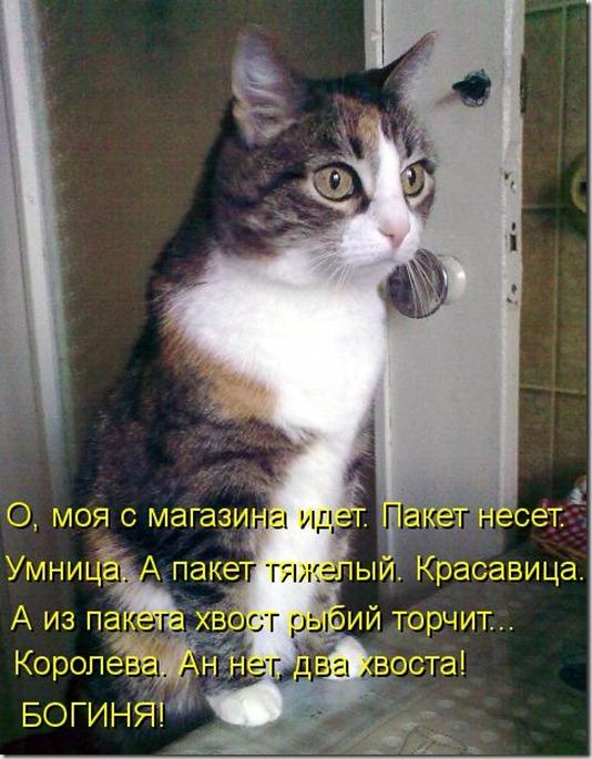 kotomatritsa_8