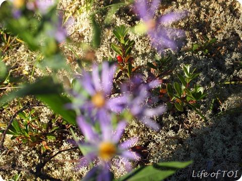 hiddenberry