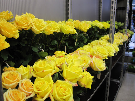 A large selection of different types of yellow roses.
