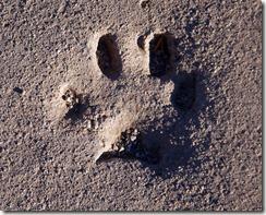 Apache Trail AZ 027