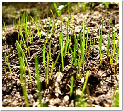 grass_sprouts