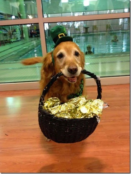 animals-st-paddys-day-008