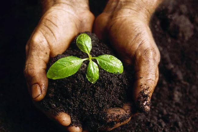 Πανευρωπαϊκή κινητοποίηση για την ελευθερία των σπόρων