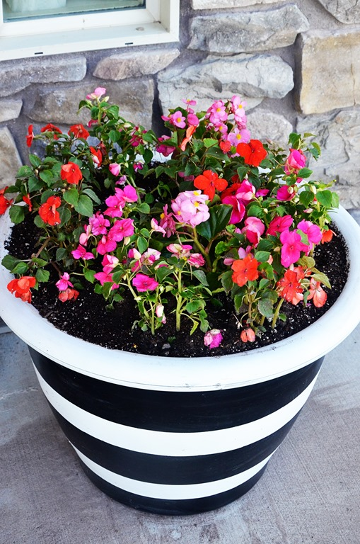 Striped Pot with Bright Flowers
