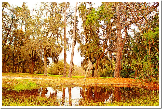 swamp-public-domain-pictures (5)